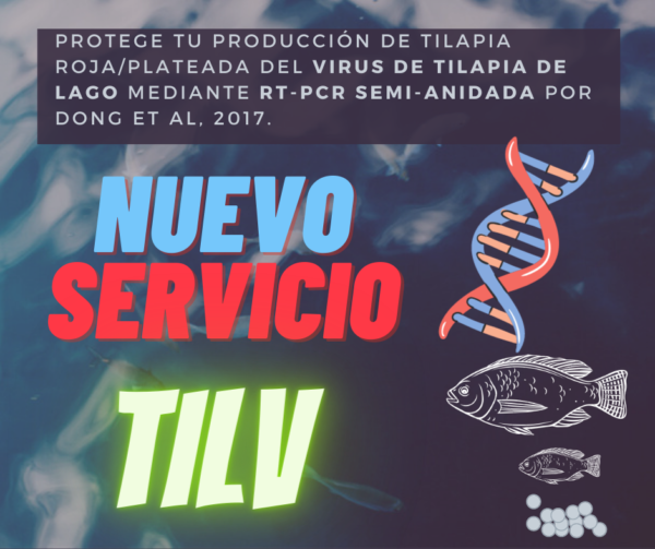 virus_tilapia_lago_tilv_servicio